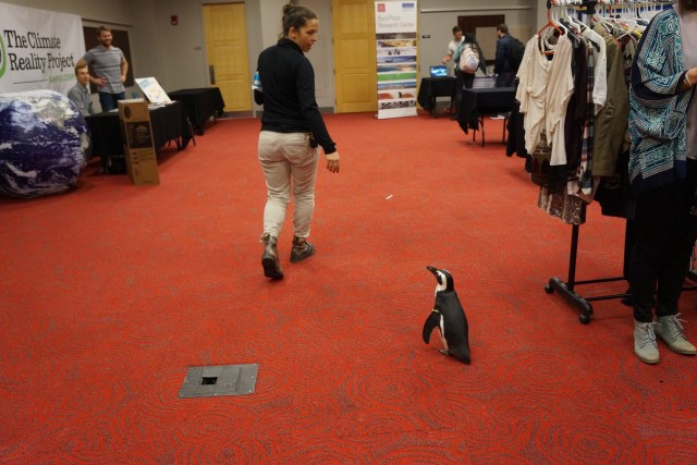 Penguins love sustainability!