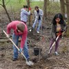 Planting of native species at Carmack Woods