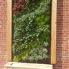 Coca Cola Sustainability Grant Past Winner - Green Wall Project
